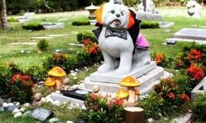 Pet Memorial Garden - Nirvana Funeral Service